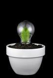 идеи принципиальной схемы зеленые растущие Стоковые Фото