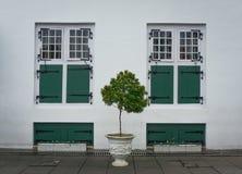 2 идентичных зеленых окна с деревом в среднем фото принятом в Джакарту Индонезию Стоковое Фото