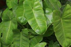 идет зеленый цвет рециркулирует Стоковые Изображения