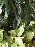 идет зеленый цвет рециркулирует стоковые фотографии rf