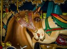 идет круг лошади веселый Стоковое Фото