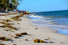 Идет пляж Стоковые Изображения