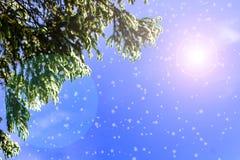Идет снег на спрусе, солнце в небе, ем идти снег ` s Стоковые Фотографии RF