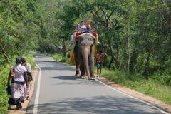 Идет слон около Sigiriya Sri Lanka стоковые фотографии rf