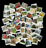 Идет Шри-Ланка, предпосылка с фото перемещения ориентир ориентиров Цейлона Стоковые Фото