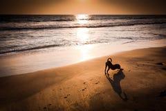 Идея принципиальной схемы йоги собаки Стоковое фото RF