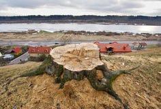 Идея проблемы обезлесения, городской вопрос стоковая фотография