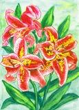 лилии красные Стоковое Фото