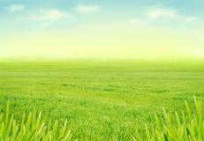 Идилличный лужок весны Стоковые Фото