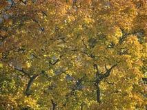 И листья которые зеленый поворот, который нужно коричневеть Стоковое Изображение