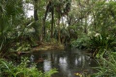 Идите дождь в южном лесе, Флориде, США Стоковые Изображения
