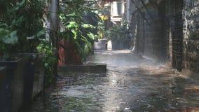Идите дождь падать на заводы в пустой улице в Мумбае сток-видео