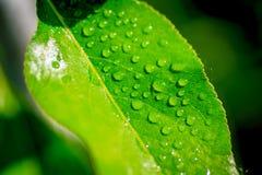 Идите дождь падения Стоковое Изображение