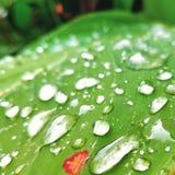 Идите дождь падения стоковое фото