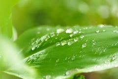 Идите дождь падения Стоковое фото RF
