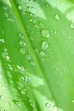Идите дождь падения Стоковая Фотография