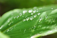 Идите дождь падения Стоковые Изображения