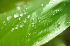 Идите дождь падения Стоковая Фотография RF