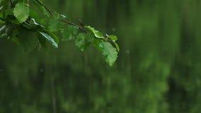 Идите дождь ударяющ ветвь и листья ольшаника вися над озером сток-видео