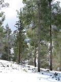 Идите снег в древесины Стоковые Фотографии RF