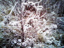 Идите снег над сухой травой, предыдущей зимой, Россией Стоковая Фотография RF