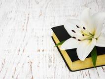лилия пасхи библии Стоковое фото RF
