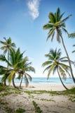 Идилличная карибская береговая линия Стоковые Изображения RF