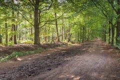 Идилличный ландшафт леса в лете Стоковая Фотография RF