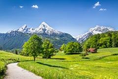 Идилличный ландшафт лета в Альпах стоковые изображения