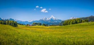 Идилличный ландшафт лета в Альпах стоковая фотография