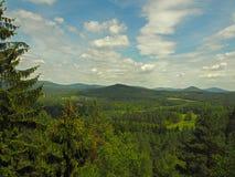 Идилличный взгляд с елевыми деревьями Forest Hills и лугами стоковое изображение rf