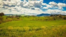Идилличный зеленый луг Стоковые Фотографии RF