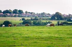 Идилличный сельский ландшафт в Англии Стоковое Фото