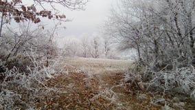 Идиллия зимы стоковое фото rf