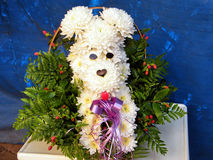 Или Yehuda собака хризантемы 2010 Стоковое фото RF