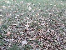 и осень приехала в южное полушарие стоковая фотография