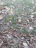 и осень приехала в южное полушарие стоковые изображения rf
