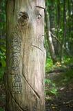 Идол леса Стоковые Изображения RF