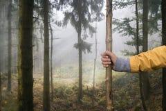 Идти в лес с пешей ручкой Стоковое Изображение RF