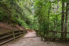 Идти в зеленый цвет Стоковые Фото
