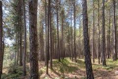 Идти в древесину Стоковое фото RF