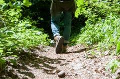 Идти в древесины Стоковая Фотография RF