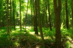 Идти в тихую природу весны неоцененн Стоковое Фото