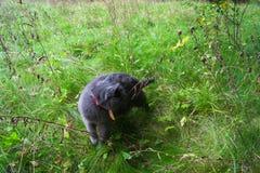 Идти кота Стоковая Фотография RF