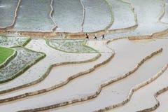 Идти к полям Стоковое Фото