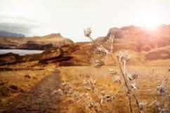 Идти на путь в Мадейре на заходе солнца Стоковые Изображения RF