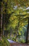 Идти на Alpsee Стоковое фото RF