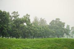 Идти дождь день в парке стоковое изображение