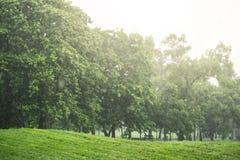 Идти дождь день в парке стоковые изображения