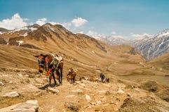 Идти лошадей гористый Стоковые Фото